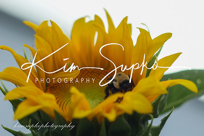 Sunflowers & bee