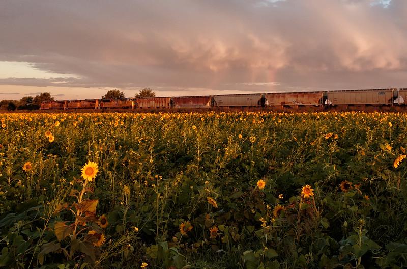 Sunflowers, Train, and Rainbow