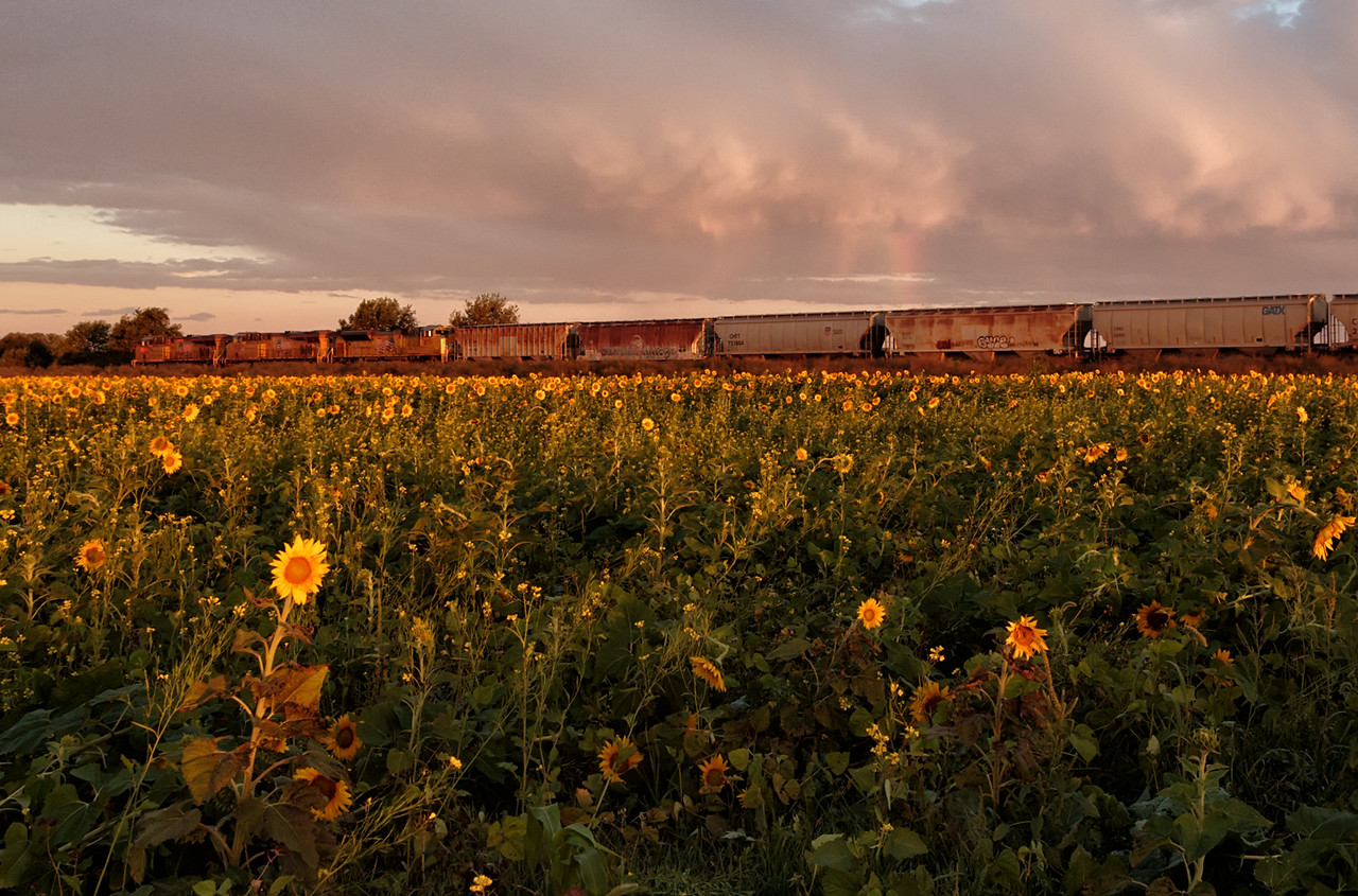 Sunflowers, Train, and Rainbow