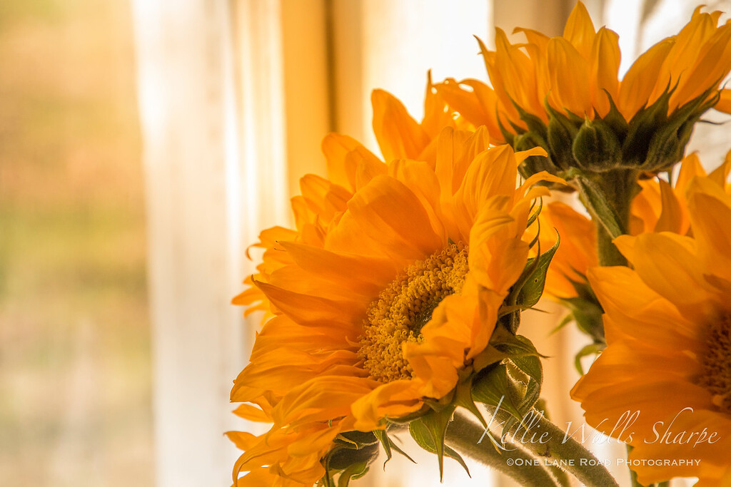 Sunflowers for Valentine's Day