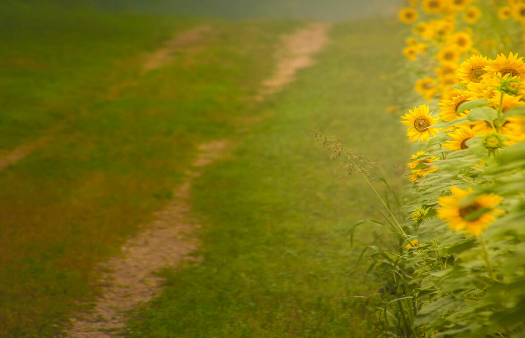 A Good Path