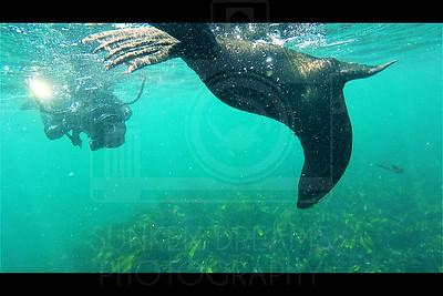 Seal Shootin'
