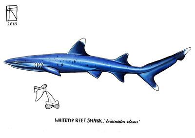 200 sharks