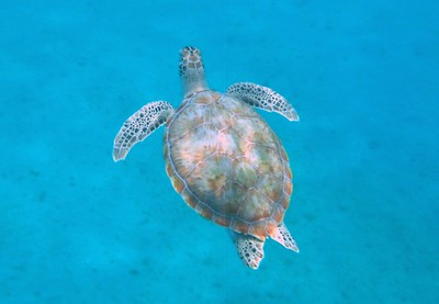 Becky Davis Diving Barbados