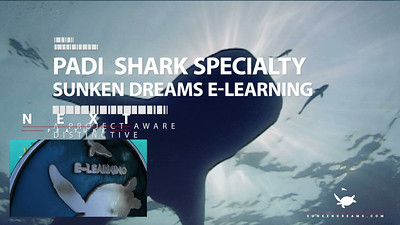 SDSDA - PADI Shark Specialty Preview