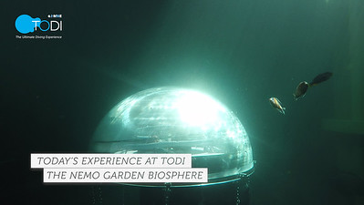 Today's Experience at TODI - Nemo's Garden Biosphere Installation
