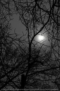 015-sun_branches-wdsm-19mar19-08x12-008-500-9426