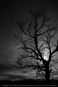 015-sunset_tree-wdsm-26nov17-08x12-007-bw-3089
