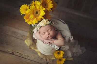 sunny dayze newborn