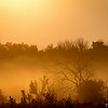 A Golden Sunrise Through The Fog At Carriage Hill Preserve 7-31-2014