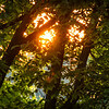 Sunrise Through The Trees  6-23-2014