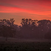 A Foggy Sunrise  6-26-2014