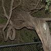 051212 Tree - Carmel Sunset Center 003