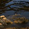 071616 Juniper and Rocks - Pacific Grove 004