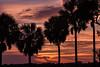 160826_11_FL_SK_Sunrise-1