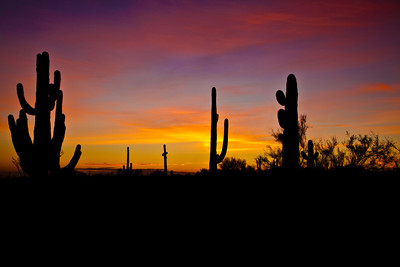 sonoran_sunset_3525