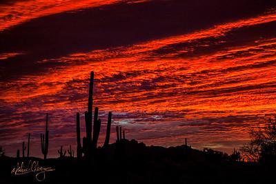 Sonoran Sunrise #22