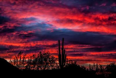 Sonoran Sunrise #25