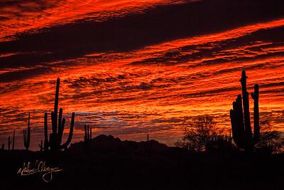 Sonoran Sunrise#23