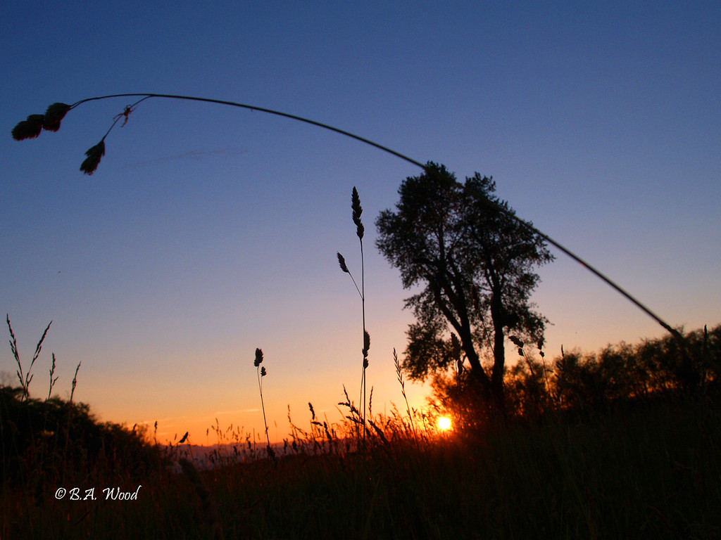 SS 015<br /> <br /> Sunset in a hay field.
