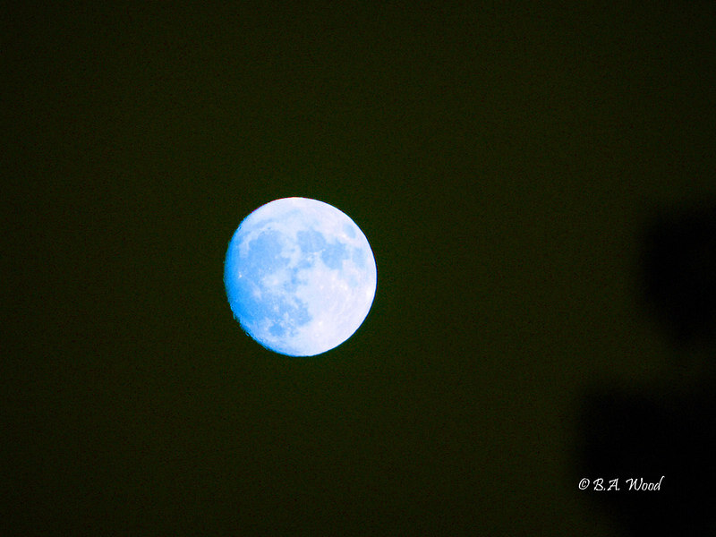 FM 020<br /> <br /> Once in a blue moon.