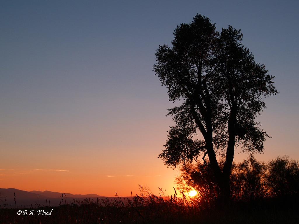 SS 014<br /> <br /> Sunset at the Survivor tree.
