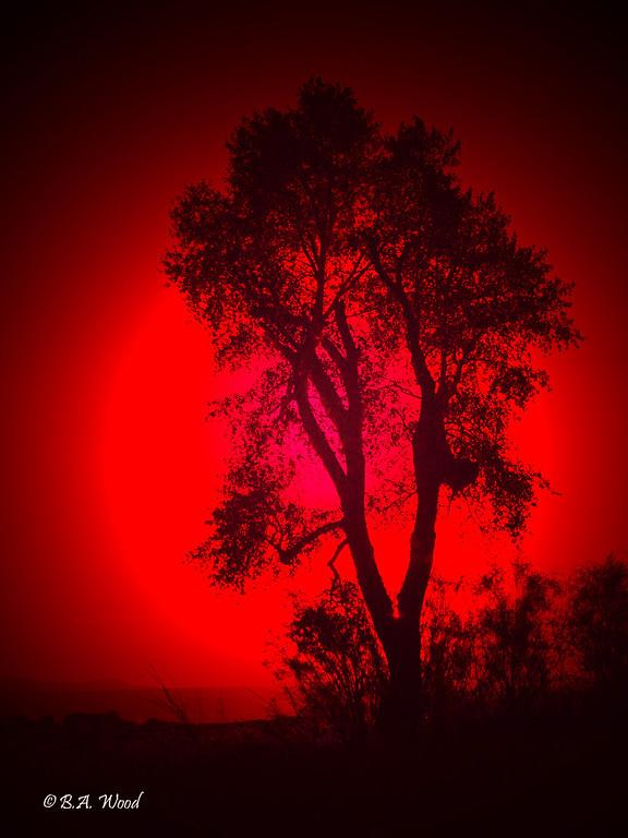 SS 012<br /> <br /> Sunset at the Survivor tree.