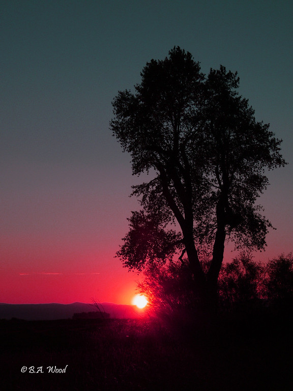 SS 016<br /> <br /> Sunset at the Survivor tree.