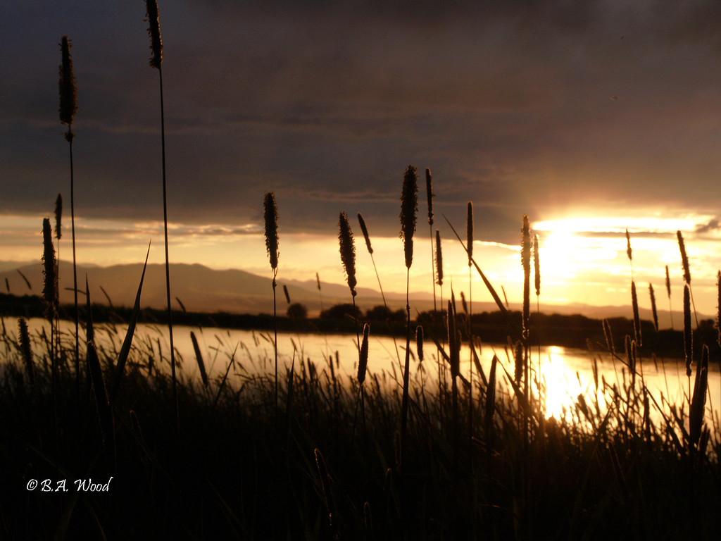 SS 022<br /> <br /> Sunset on a Golden pond.