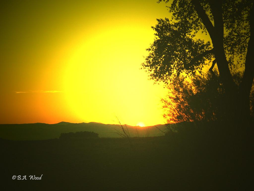 SS 018<br /> <br /> Sunset at the Survivor tree.