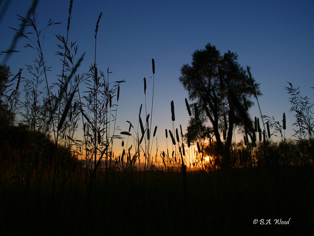 SS 013<br /> <br /> Sunset in a hayfield.