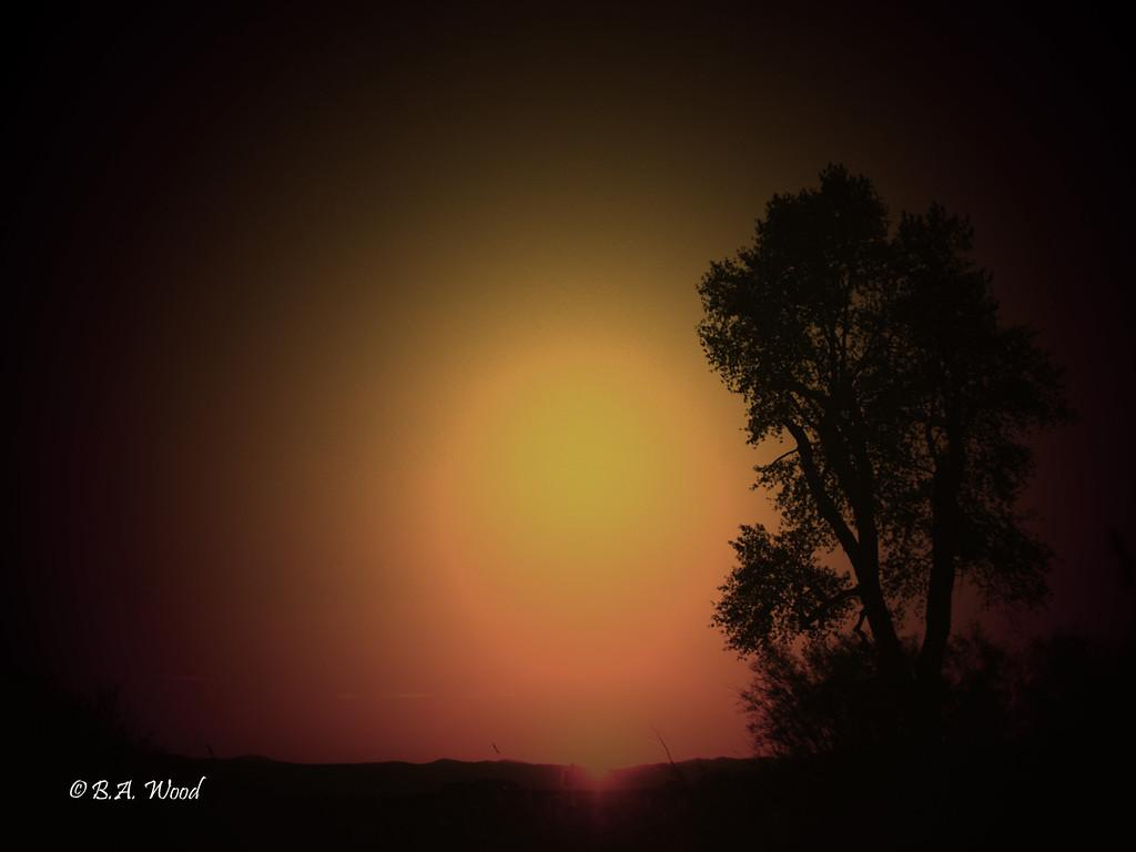 SS 017<br /> <br /> Sunset at the Survivor tree.
