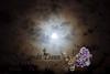 09-09-2011-MoonDog-7901
