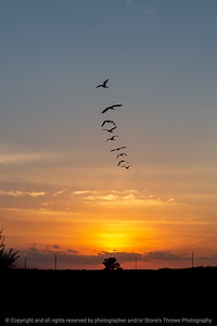 015-sunset_geese-ankeny-05sep20-04x06-007-400-8026