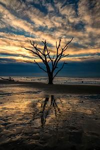 Boneyard Tree