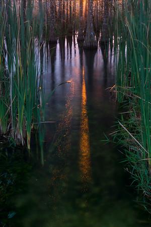 Everglades Gold