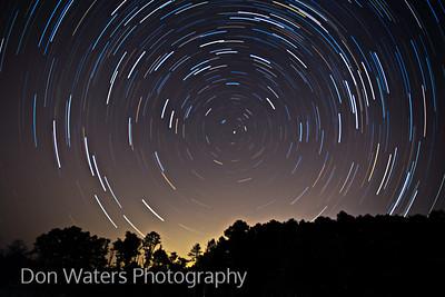 Yellowwood stars