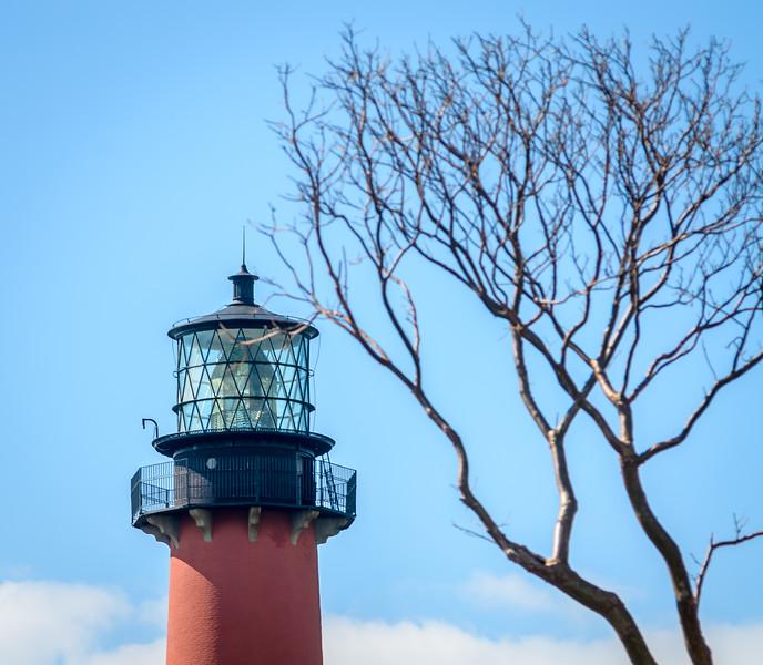 Jupiter Lighthouse - Tree