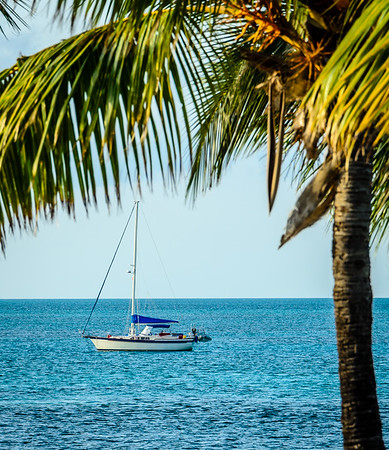 Sailboat with Palm