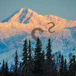 Treed Sunrise Denali