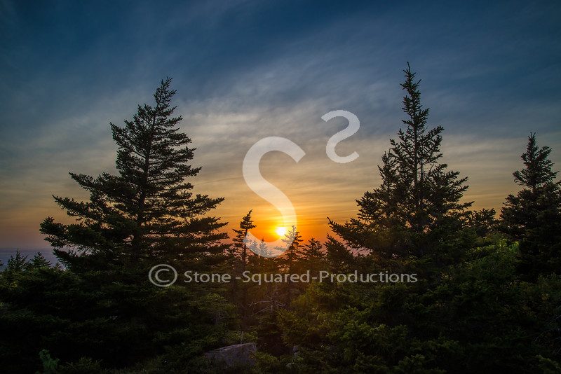 Twin Spruce Sunset