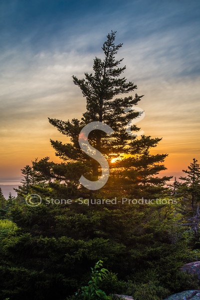 Forested Sunset