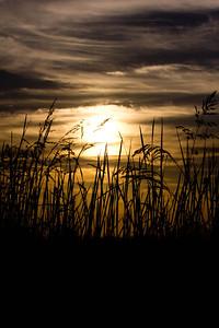 Rice fields 028