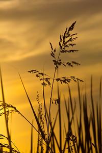 Rice fields 039
