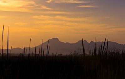 Rice fields 024