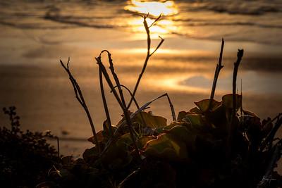 Del Mar- Torrey Pines (1)