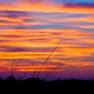 South Beach Grass at Sunset, Edgartown, Martha's Vineyard 120710_6228