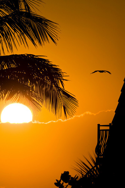 na_Pelican_Sunrise_1637
