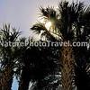 Sunrise & Palm Trees  in Florida