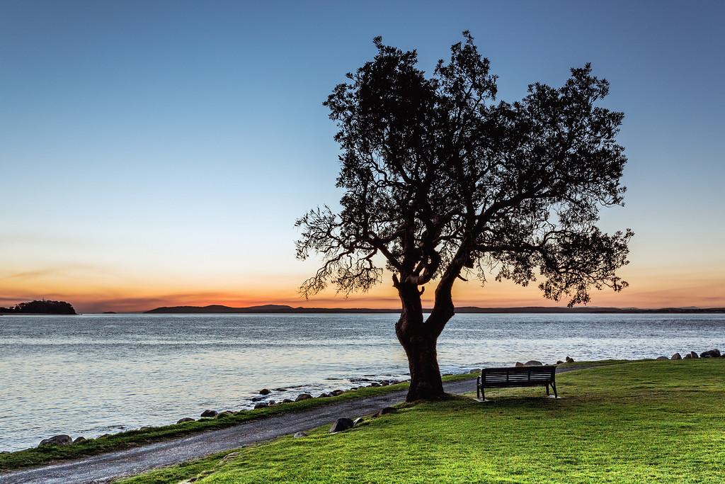 The Lone Tree on Tomaree Headland